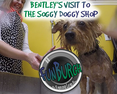 Bentley Visits the Soggy Doggy Shop